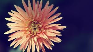 Download-Vintage-Flower-Backgrounds-HD-Wallpaper